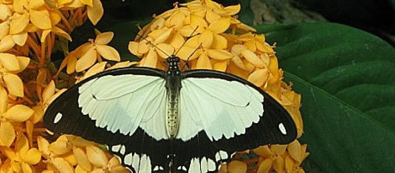 Only after crawling can a butterfly fly